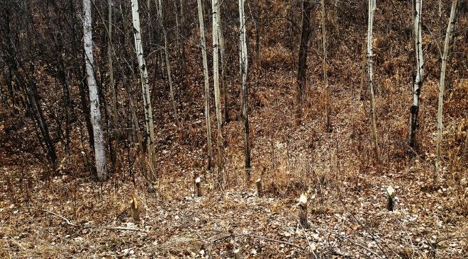 Edge of the Barren Woods