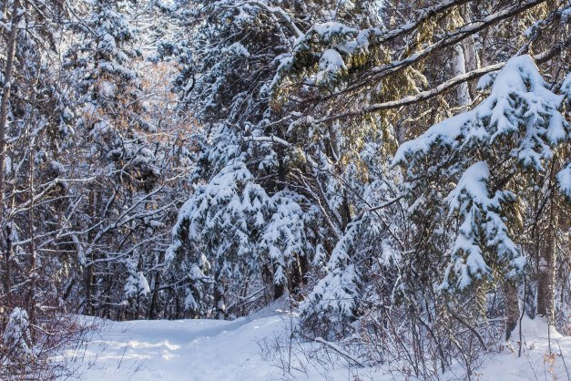 Snowy Trail in Edmonton's River Valley