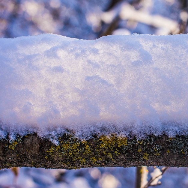 Translucent Snow - sunshine lighting up the fresh snow piled up on a fallen tree trunk