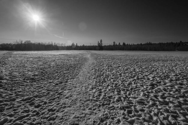 Afternoon Sun (in Buena Vista Park, Edmonton)