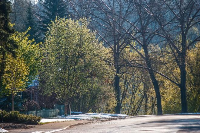 Trees on My Street